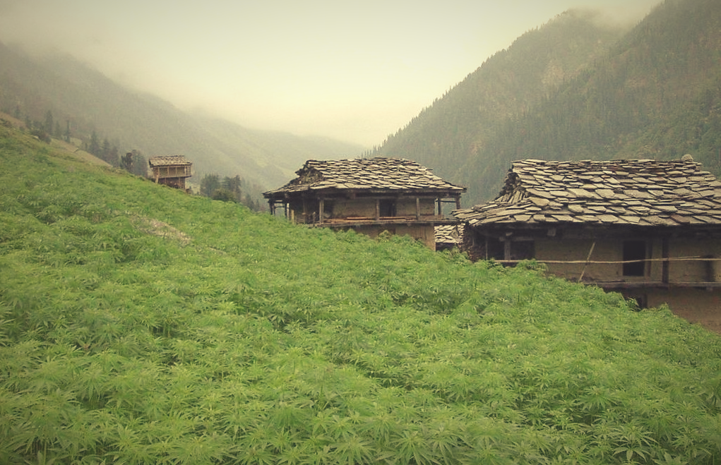 Malana Cream - top 10 secrets of malana, kasol